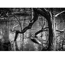 Mysterious Wood Lake Photographic Print