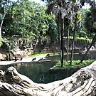 Tropical Pond by terrebo