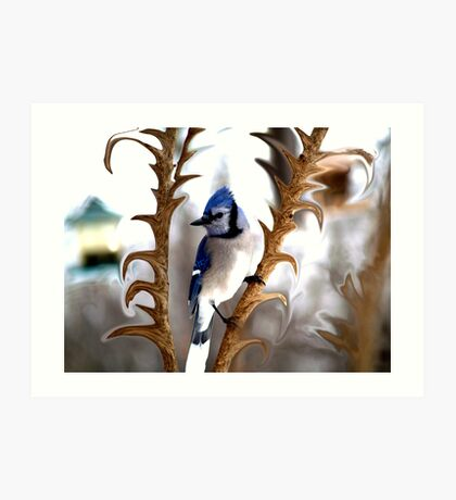 Special Effects of the Blue Jay. Art Print