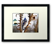 Special Effects of the Blue Jay. Framed Print