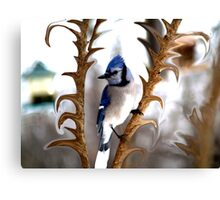 Special Effects of the Blue Jay. Canvas Print