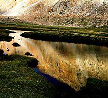 grasslands. ladakh, northern india by tim buckley | bodhiimages