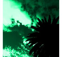 Palm Trees Silhouette - Green Sunset Photographic Print