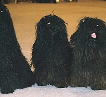 Super Hungarian Puli by welovethedogs