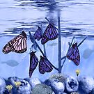 Butterfly Reef by Aerhona