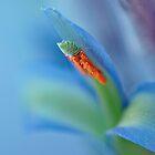 Blue by Jenny Dean