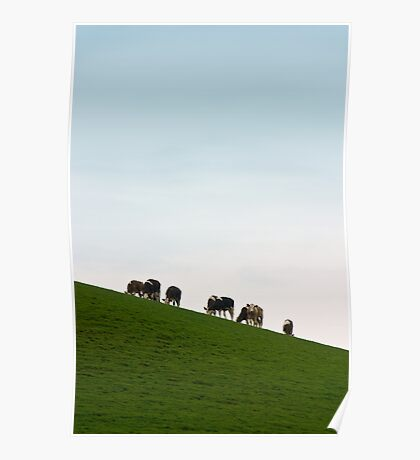 Cows on a Slope Poster