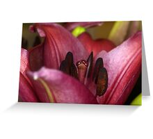 Valley of the Lily Greeting Card