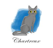 Chartreux Photographic Print
