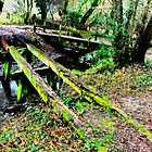 Old Bridge, Chilworth Gunpowder Mills  by Colin J Williams Photography