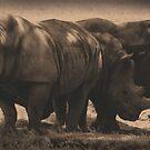 White Rhino Gathering by Dennis Stewart