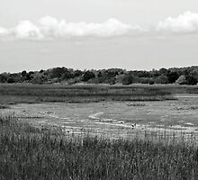 """Marsh"" Low Tide by daniels"