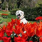 Ditte with tulips by Trine