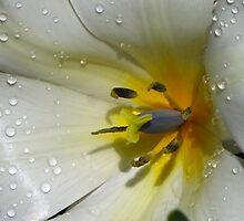 White beauty  by LudaNayvelt