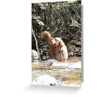 Golden In The River Greeting Card