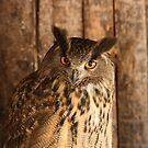 Owl so Lovely by Pamela Jayne Smith