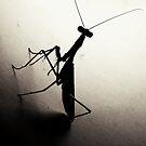 Mantis stare down by iamelmana