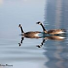Love Canada Geese by KatMagic Photography
