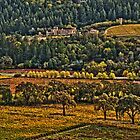 Napa Vineyards by Fraser Ross
