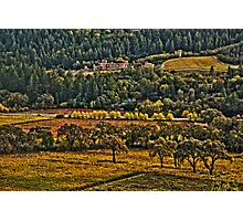 Napa Vineyards Photographic Print