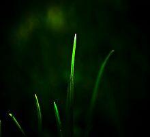 Blades of Grass by Svetlana Sewell