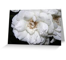 ROSE IN WHITE Greeting Card