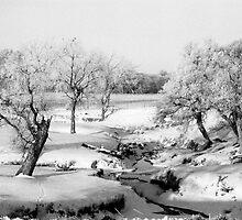 Snowy Creekbed by marilynz