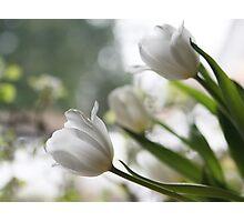 White Elegance Photographic Print