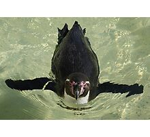 Penguin  Photographic Print