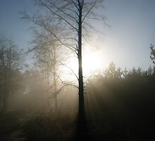 Winter Forest 2 by burlism
