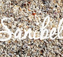 Sanibel Island Seashells by Edward Fielding