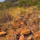Marakele National Park by Thomas Peter