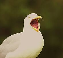 Seagull Shock!! by Franco De Luca Calce