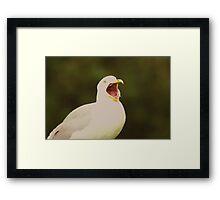 Seagull Shock!! Framed Print