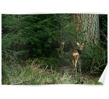 Two Young deer Poster