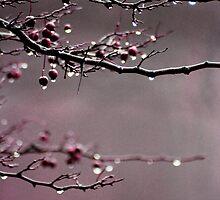 After The Rain by Lita Medinger