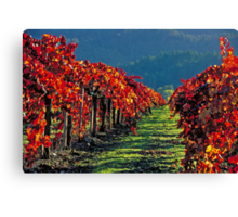 Wine Country Napa Valley Canvas Print