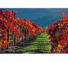 Wine Country Napa Valley Photographic Print
