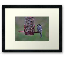 Chickadee with sunflower seed Framed Print