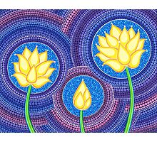 Dreamy Lotus Family Photographic Print