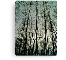 New Jersey Fores Canvas Print