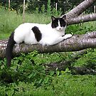 Sugar at rest cropped by Jamaboop