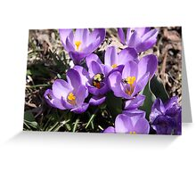 The Bee & the Crocus  Greeting Card