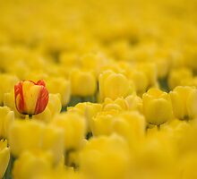 One Standout! by Appel