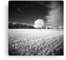 Holga Infrared Tree #7 Canvas Print