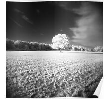 Holga Infrared Tree #7 Poster