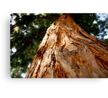 close encounter of the redwood Canvas Print
