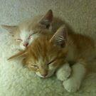 Sleepy Orange Kittens by silverdragon