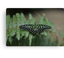 Black and Green Butterfly on Green Leaf Canvas Print
