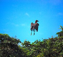 Landing... by David Towey